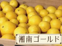 湘南ゴールドのイメージ