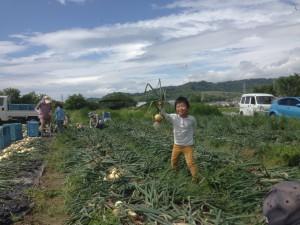 IMG_2813 たまねぎ収穫 潤ひとり